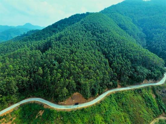 森林(lin)資源(yuan)培育